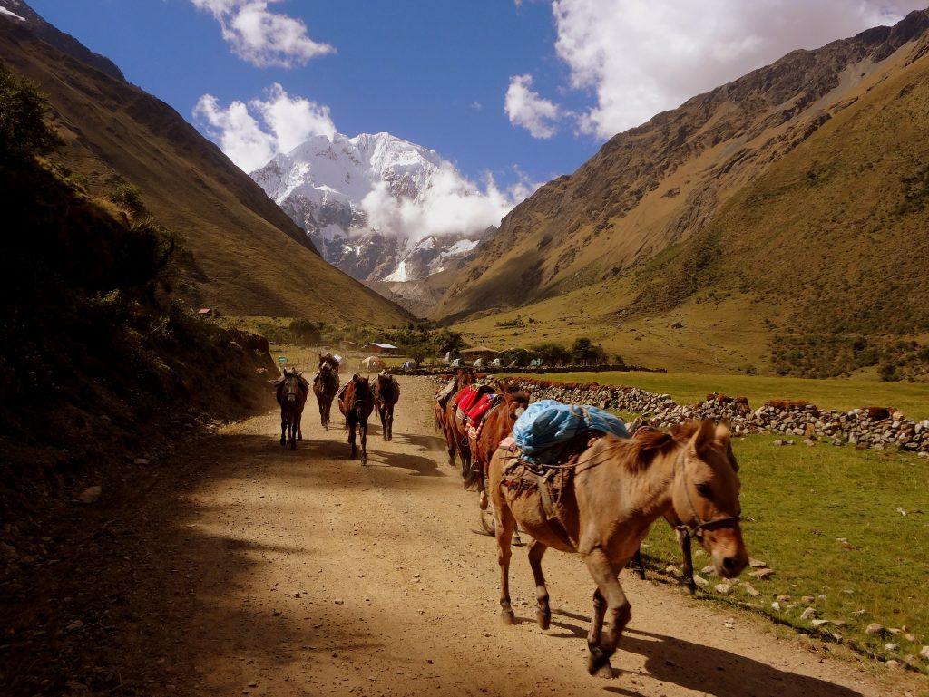 Salkantay trek mule