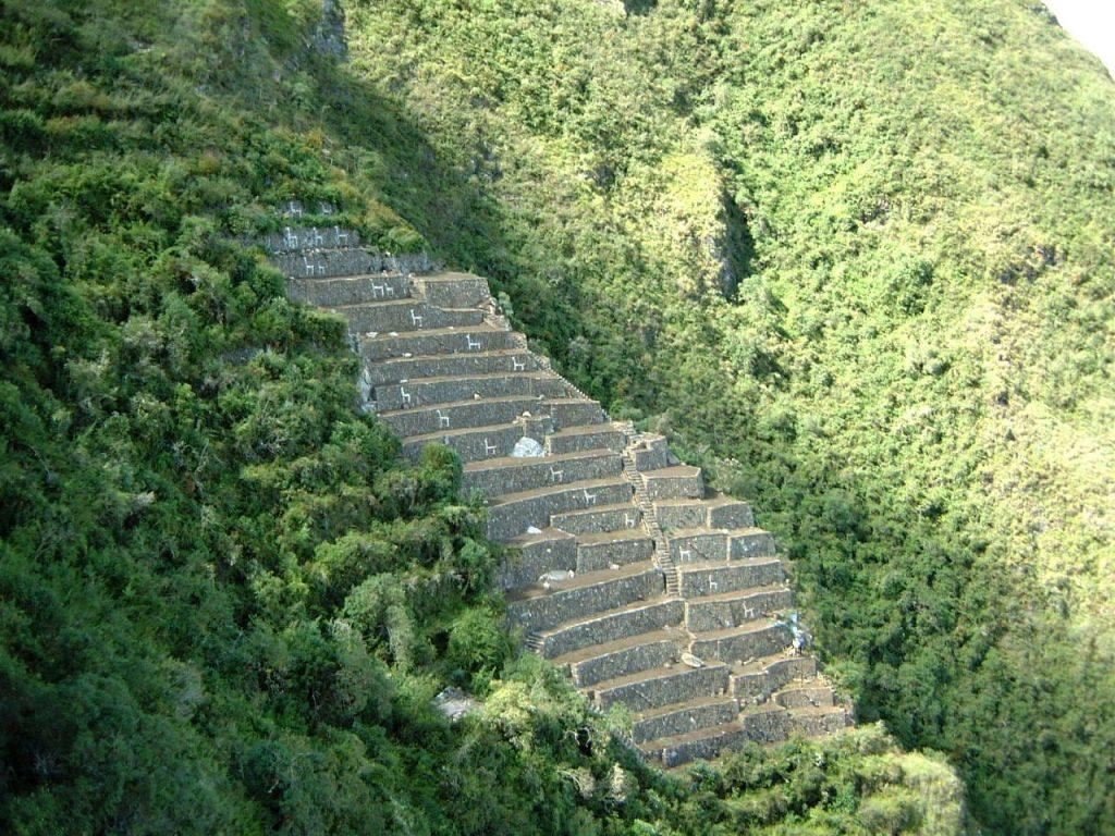 llama terraces in Choquequirao
